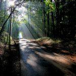ETEIGNIERES - Routes et Chemins du Parc - © B. Carbonneaux