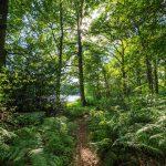 FORET - Etang de la Motte à Signy-le-Petit - © A. Leroy