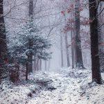 FORET - Paysage enneigé - © A. Leroy