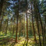 Forêt - © A. Leroy