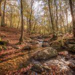 HAYBES - Ruisseau de Mohron 2 - © A. Leroy