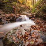 HAYBES - Ruisseau de Mohron - © A. Leroy