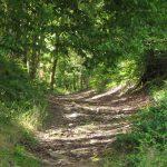 LES-HAUTES-RIVIERES - Routes et Chemins du Parc - © M. D'Orchymont