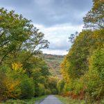 Routes et Chemins du Parc 1 - © A. Leroy