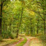 Routes et Chemins du Parc - A la chute des feuilles - © A. Leroy