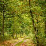 Routes et Chemins du Parc - Hargnies - © A. Leroy